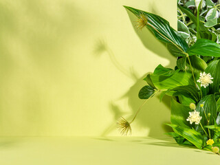 Fototapeta Minimalist botanical background with copy space. Creative showcase with fresh plants for product demonstration, promotion sale, packaging presentation or merchandise. Light and shadow. Front view.