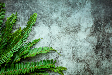 Wall Mural - Creative nature layout made of tropical leaves. Summer concept. Fern Palm and monstera leaf on wall. Nature beach background layout with free text space.