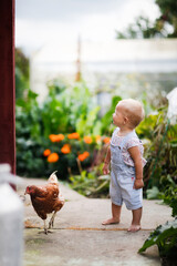 Fototapeta Funny toddler baby in shorts on shoulder straps playing with chicken on the farm, happy childhood concept