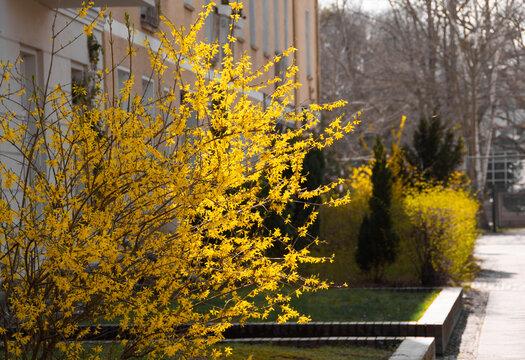 Schlierseestrasse Grünau im Frühling