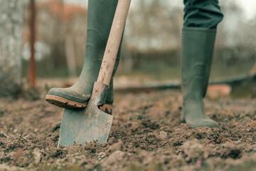 Fototapeta Farmer in rubber boots using spade gardening equipment in garden