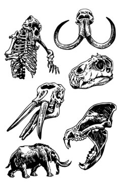 Graphical set of fossils on white background,vectors kulls , skeleton and mammoth