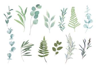 Fototapeta Floral greenery set with eucalyptus branch. Vector illustration obraz
