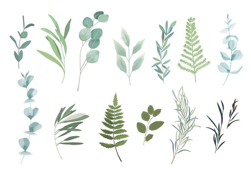 Floral greenery set with eucalyptus branch. Vector illustration