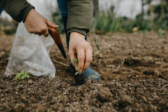 Low Section Of Woman Planting Seedling Outdoors