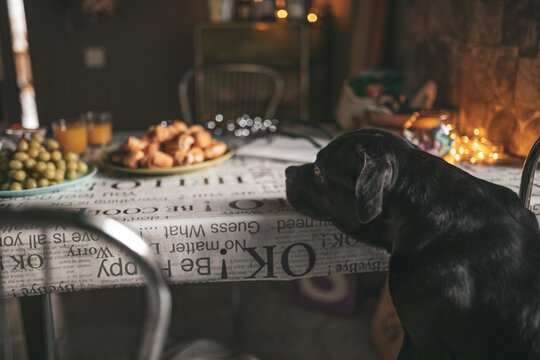 Close-up Of Dog On Table At Home