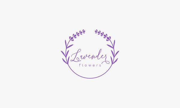 lavender flower logo design vector.