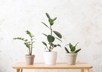 Fototapeta Table with different houseplants on light background