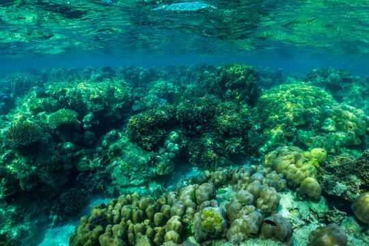 underwater scene with coral reef and fish,Surin Islands,Thailand.