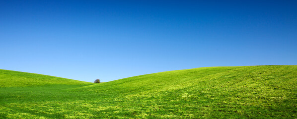 Fototapeta Spring landscape background with blue sky and green grass field.