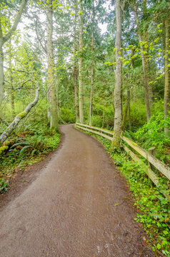 Fragment of Port Angeles Waterfront Trail at the Olympics Park. WA, USA.
