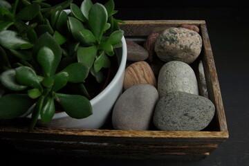 zielona roślina dekoracyjna kamienie rzeczne