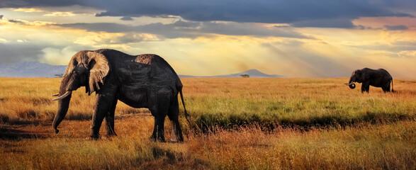 African huge elephants in the Serengeti National Park. Tanzania. African safari. Banner format.