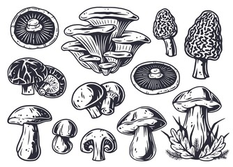 Fototapeta Mushroom picking of morel. Set of mushrooms. Vegetarian fungus boletus or cremini collection for food. Nature fungi porcini for healthy nutrition obraz
