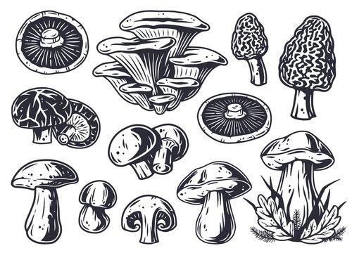 Mushroom picking of morel. Set of mushrooms. Vegetarian fungus boletus or cremini collection for food. Nature fungi porcini for healthy nutrition