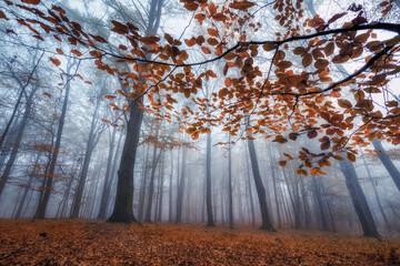 Fototapeta Las - jesień