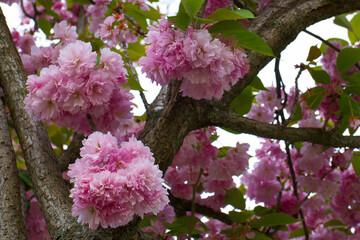 Fototapeta kwiat roślina natura płatki makro orzyroda wiosna