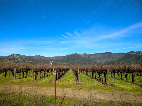 Beautiful view of a Napa valley with trees in California under a clear sky