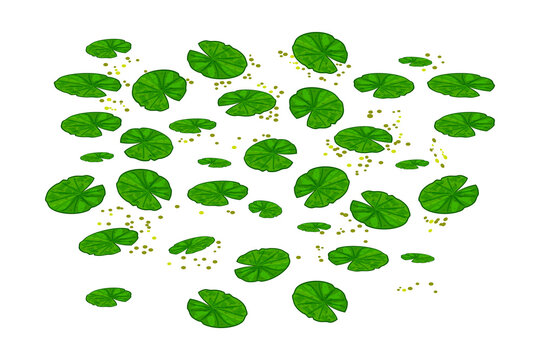 Lily pads isolated on white background. Lotus leaf pattern. Water lilies leaves. Pond texture with nenuphars or waterlily pads on the surface top. Element of nature or forest.Stock vector illustration