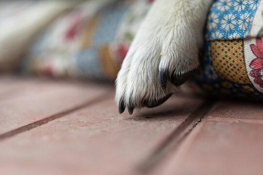 closeup of a dog paw
