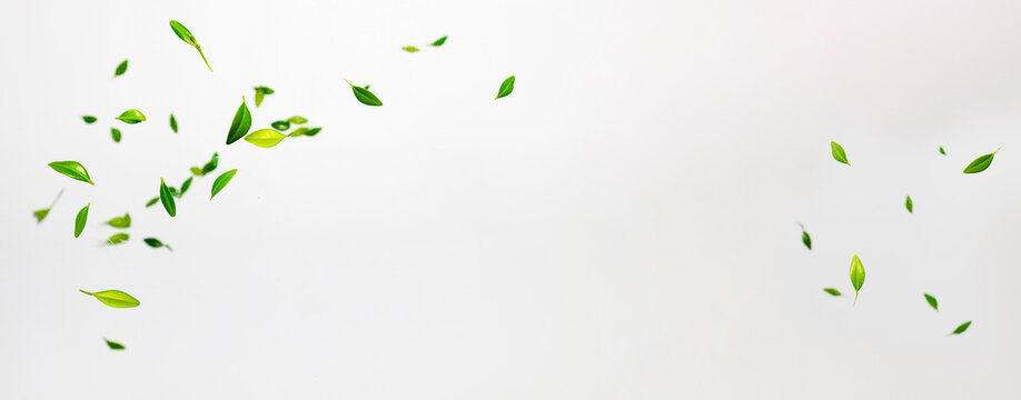 Collection of random green leaves falling in the air isolated on white background