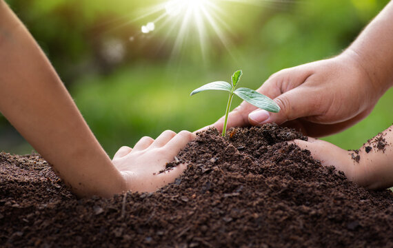 Father and children hands planting young plant together over sunlight and green background.