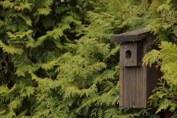 Fototapeta Budka lęgowa dla ptaków