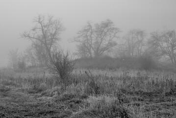 łąki we mgle 4