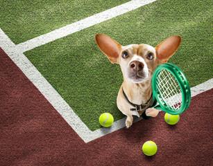Fototapeta tennis player dog
