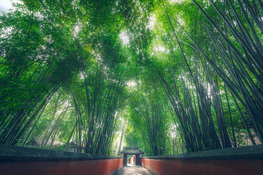 Low angle shot of green bamboo forest