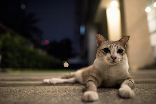 Cute short haired street cat outdoors at night looking around