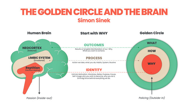 The Golden Circle and brain illustration of Simon Sinek has 3 elements starting with Why question. Diagram vector presentation inform the origin of human performance or behavior of user target goal