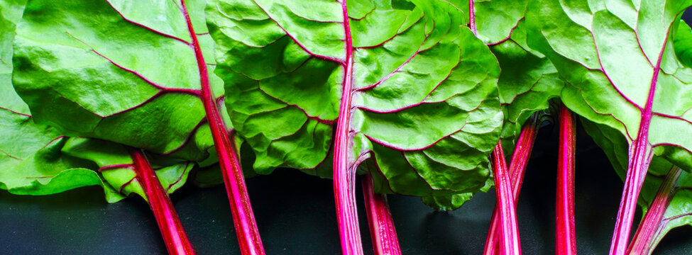 Pink and purple leaf stems stalks and veins on lush green beetroot plant leaves.  Macro closeup isolated on black background. An edible food for salad and to cook.