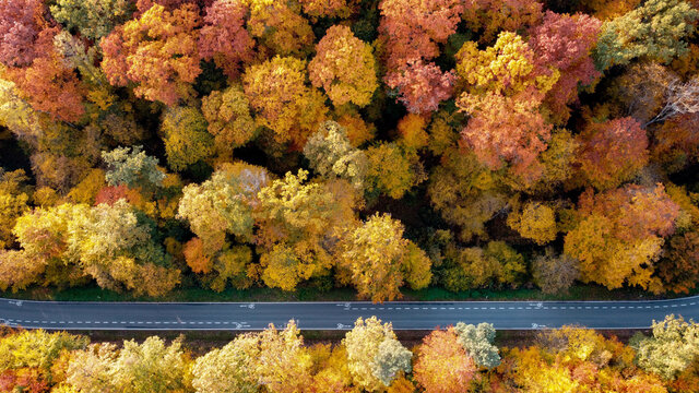 Aerial shot of a road through the autumn forest