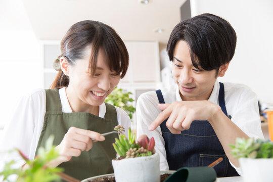 多肉植物の栽培を楽しむ若い日本人夫婦、ガーデニング、趣味