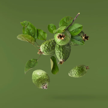Fresh raw feijoa with green leaves falling in the air