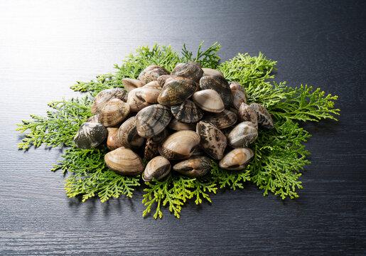 Asari clams on a cypress leaf on a black background.