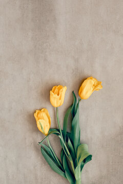 Gift or yellow tulip flowers on gray table.