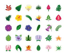 set tropical flowers leaves