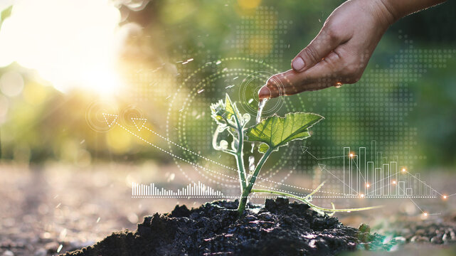 Business growth concept, Man watering young sprout with hand and  graph growth of business, Stock profits and investments, Strategy and planning of successful.