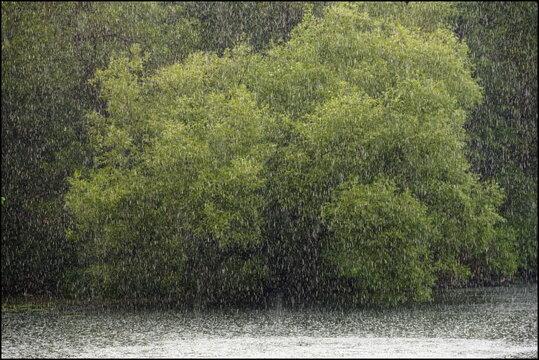 Regen, See und Baum