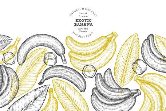 Hand drawn sketch style banana banner. Organic fresh fruit vector illustration. Retro exotic fruit design template