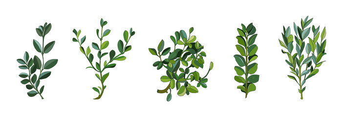 Fototapeta Set leaves and branches greenery elements of ficus in various form. Modern collection of small bushes rubber plant on white background. Vector illustration.