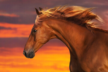 Fototapeta Red horse with long mane close up portrait against sunset sky