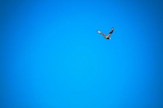 Azul gaivota.