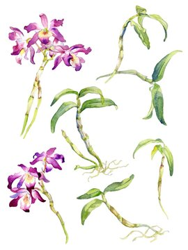 A Set of Vector Design Parts of Dendrobium Orchid