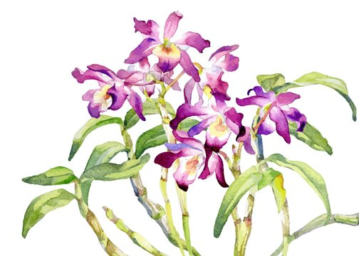 A Vector Bouquet Image of Dendrobium Orchid