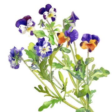 A Vector Bouquet Image of pansies