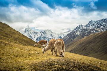Fototapeta Trek al Ausangate, Cusco - Peru