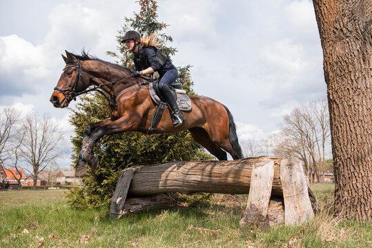 Reiterin springt mit ihrem Pferd über einen Baumstamm